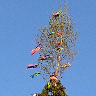 Der Maibaum steht…